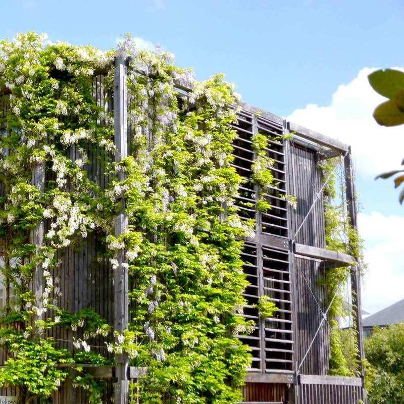 Вертикальное озеленение система