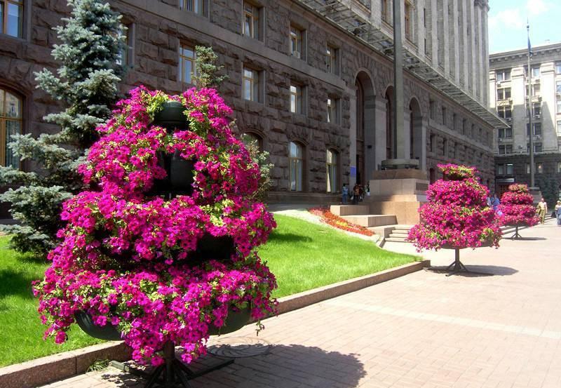 Вертикальное озеленение  цветник