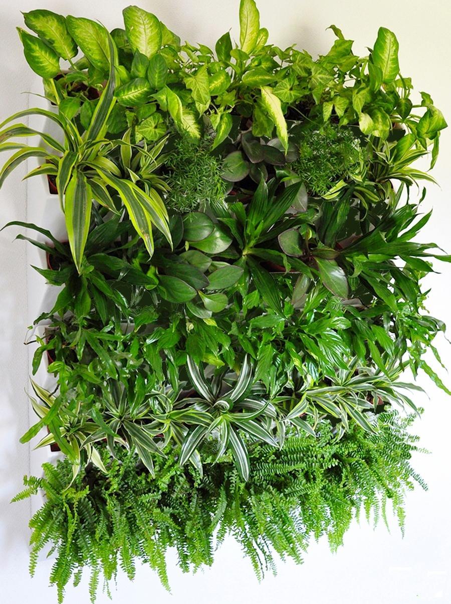 Вертикальное озеленение модуль